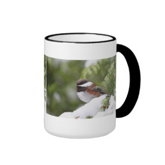 Chickadee in Snow on a Cedar Tree Ringer Coffee Mug