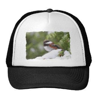 Chickadee in Snow on a Cedar Tree Trucker Hat