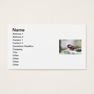 Chickadee in the Snow Business Card