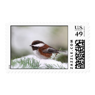 Chickadee in the Snow Postage Stamp