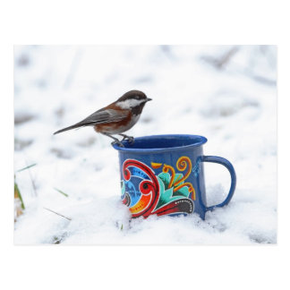 Chickadee in the Snow Postcards