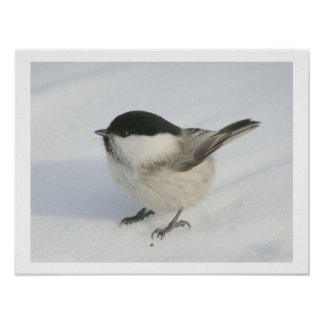 Chickadee in the Snow Poster