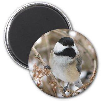 Chickadee Magnet magnet