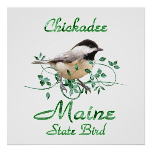 Chickadee Maine State Bird Poster