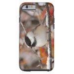 Chickadee Negro-capsulado adulto en la nieve, Funda De iPhone 6 Tough