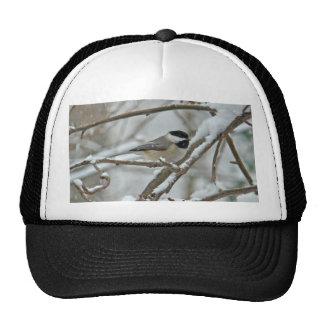 Chickadee Negro-Capsulado en tormenta de la nieve Gorros