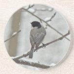 Chickadee Negro-Capsulado en tormenta de la nieve Posavasos Personalizados