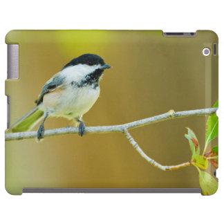 Chickadee Negro-Capsulado encaramado en Cottonwood Funda Para iPad