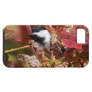 Chickadee Negro-capsulado iPhone 5 Carcasas