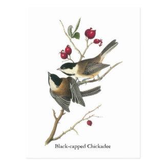 Chickadee Negro-capsulado, Juan Audubon Postal