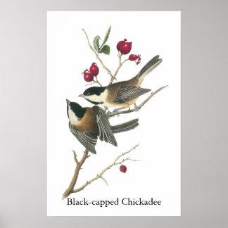 Chickadee Negro-capsulado Juan Audubon Posters
