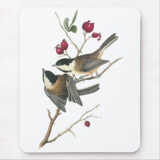 Chickadee Negro-capsulado, Juan Audubon Tapete De Ratones