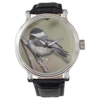 Chickadee Negro-capsulado Relojes