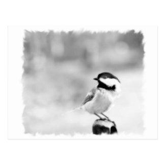 chickadee negro-capsulado postal