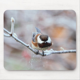 Chickadee on a Frosty Tree Branch Mouse Pad
