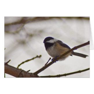 Chickadee on a Twig Card