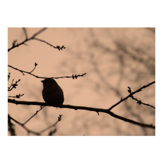 Chickadee on Branch in Twilight Silhouette Poster