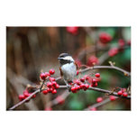 Chickadee on Branch with Red Berries Photographic Print