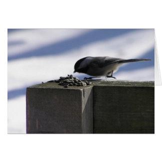 Chickadee on Ice Greeting Cards