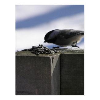 Chickadee on Ice Postcard
