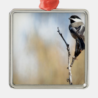 Chickadee on Yucca Pod Metal Ornament