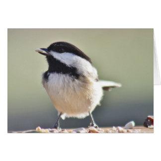 Chickadee photography card