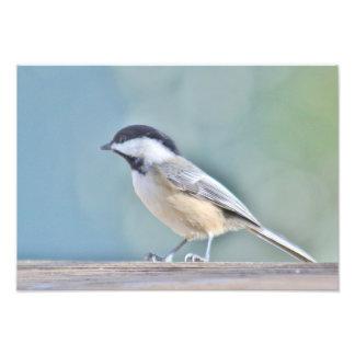 Chickadee photography photo print