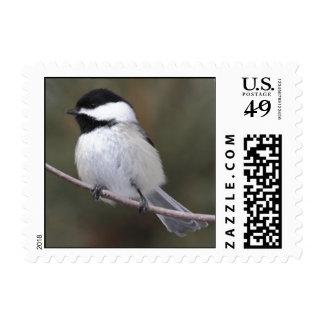 Chickadee Postage Stamp
