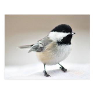 Chickadee Postales