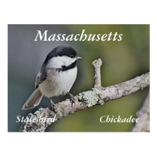 Chickadee Postcard