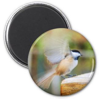 Chickadee Take Off Magnet