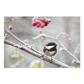 Chickadee y bayas rojas en invierno fotografía