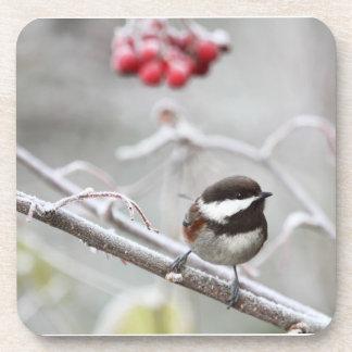 Chickadee y bayas rojas en invierno posavasos