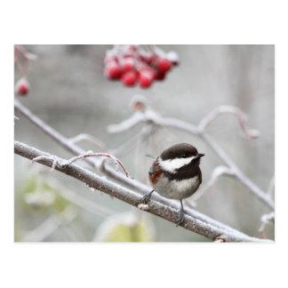 Chickadee y bayas rojas en invierno tarjetas postales