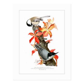Chickadee y trepatroncos tarjetas postales