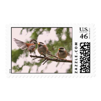 Chickadees del bebé y pájaro de la madre