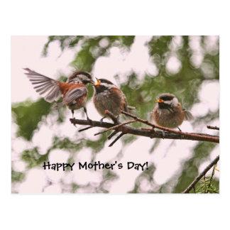 Chickadees del bebé y pájaro de la madre postal