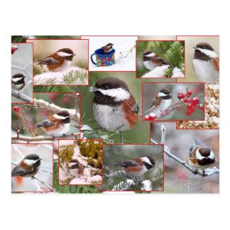 Chickadees en collage del invierno postales