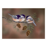 CHICKADEES & PINECONES by SHARON SHARPE Poster
