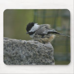 Chickdee taking bath mouse mats