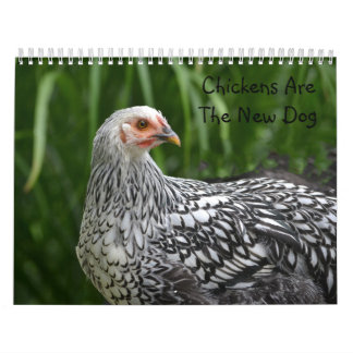 Chicken Calendar