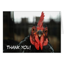 CHICKEN CARD: Thank you Card