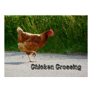 Chicken Crossing The Road Print