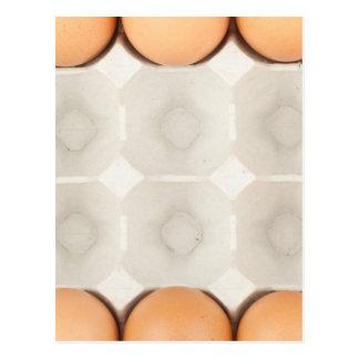 Chicken eggs frame postcard