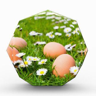 Chicken eggs in grass with daisies award