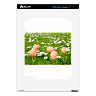 Chicken eggs in grass with daisies decal for iPad 3