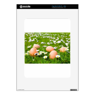 Chicken eggs in grass with daisies skin for the iPad