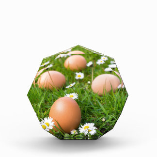 Chicken eggs in spring grass with daisies acrylic award