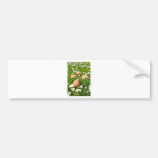 Chicken eggs in spring grass with daisies bumper sticker
