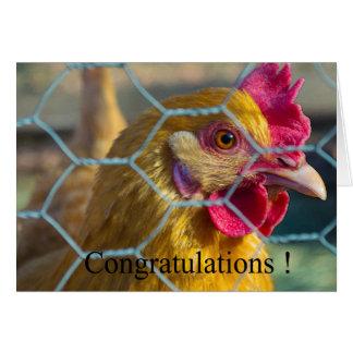 Chicken graduation card